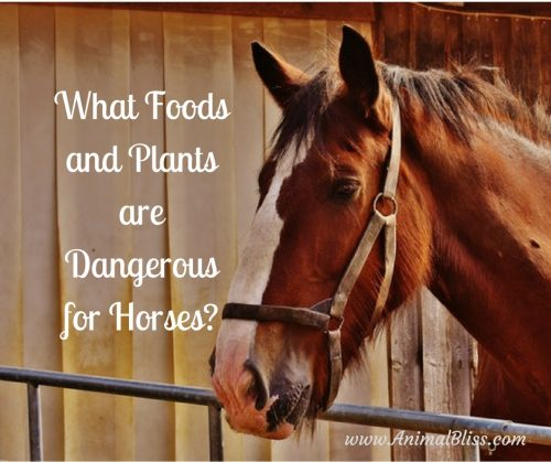 Foods That Are Dangerous For Horses To Eat