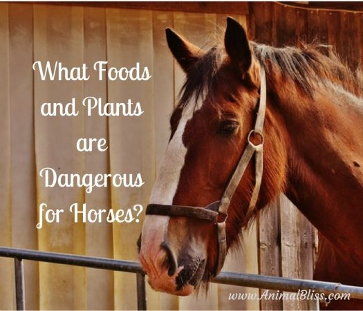 Do you know what foods and plants are dangerous for horses? It's tempting to think horses can eat just about anything, but that's not the case.