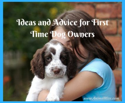 These ideas and advice for first time dog owners are essential for finding the right dog for you and your family.