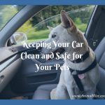 Keeping Your Car Clean and Safe for Your Pets