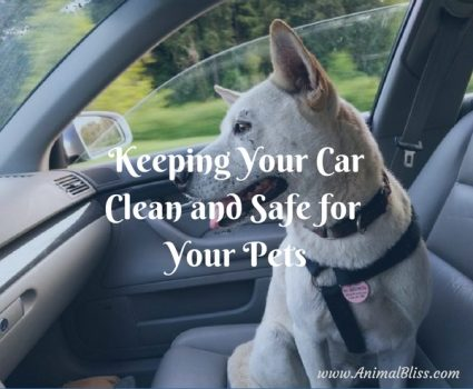 Taking your pets with you for car rides can be a lot of fun. It's important to you that your furry friends stay safe. But you want a clean car too, and not coated with dog hair. Here are a few suggestions for keeping your car clean and safe for your pets. These ideas will make your trips less stressful.