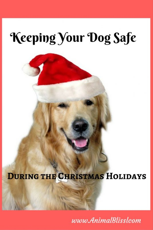 Keeping Your Dog Safe During the Christmas Holidays