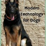 Modern Technology for Dogs Helps Keep Them Healthy