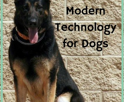 Modern technology for dogs has made advancements that allow our pups to stay happy and healthy, even when you cannot be around in person.