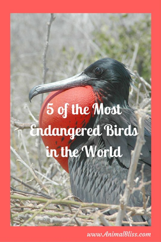 5 of the Most Endangered Birds in the World