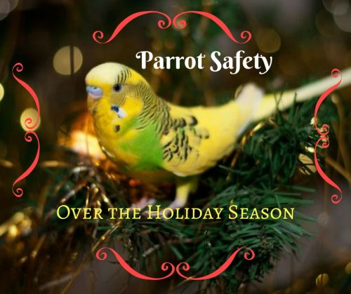 Parrot Safety Over the Holiday Season
