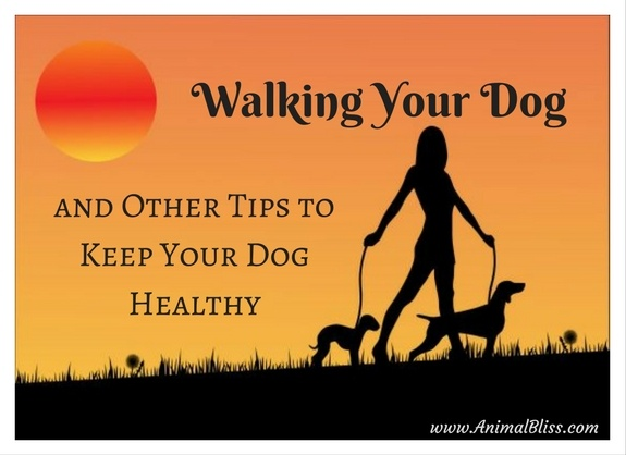 Walking Your Dog and Other Tips to Keep Your Dog Healthy