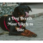 List of 4 Dog Breeds Most Likely to Bite