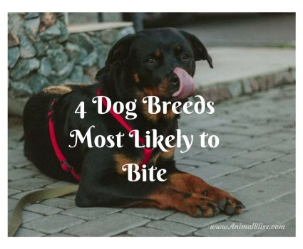 4 Dog Breeds Most Likely to Bite
