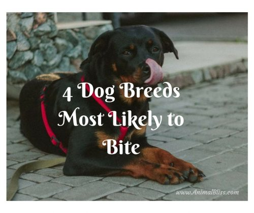Dog Breeds Most Likely To Bite List