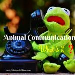 What is Animal Communication – How Can it Help Our Pets?
