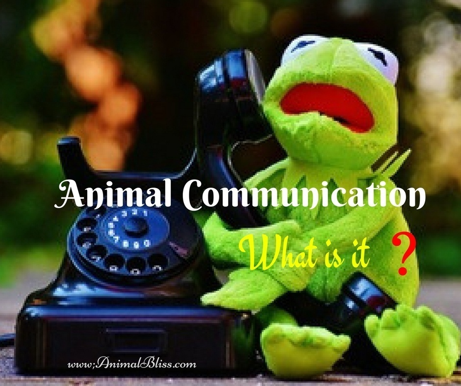What is Animal Communication and How Can it Help our Pets?
