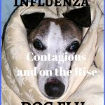 Canine Influenza, Dog Flu is Contagious and on the Rise