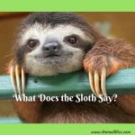What Does the Sloth Say?  Nothing But Cuteness Video