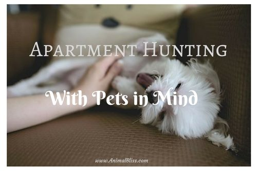 Apartment Hunting With Your Pets in Mind
