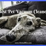 Best Pet Vacuum Cleaners to Eliminate Pet Hair and Dander