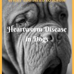 Heartworm Disease in Dogs – What You Need to Know