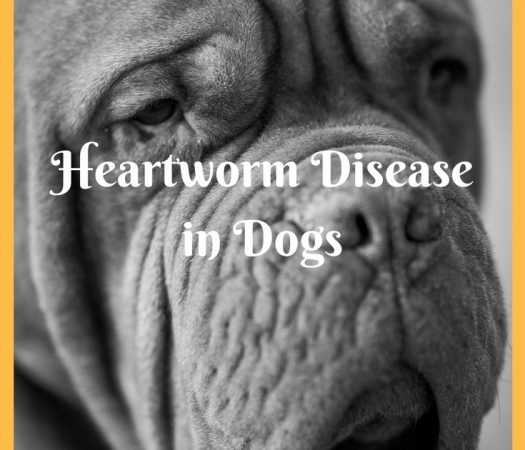 What You Need to Know About Heartworm Disease in Dogs