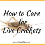 How to Care for Live Crickets, Keeping Your Crickets Alive