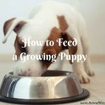 How to Feed a Growing Pup – The Path to Vitality