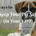 3 Ways to Keep Your Pet Safe in the Yard – Free to Roam