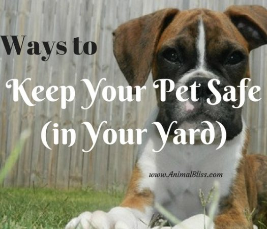 3 Ways to Keep Your Pet Safe in the Yard