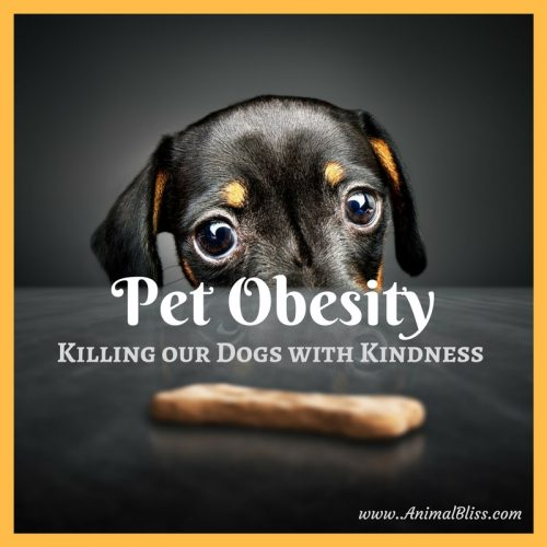 Pet Obesity - Killing our Dogs with Kindness