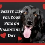 Safety Tips for Your Pets on Valentine's Day