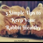 3 Simple Tips to Keep Your Rabbit Healthy