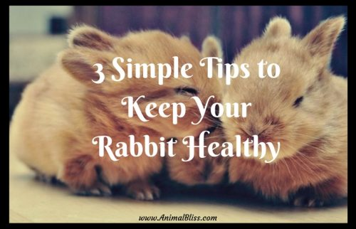 Learn These 3 Simple Tips to Keep Your Rabbit Healthy