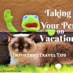 Taking Your Pet on Vacation – Important Travel Tips