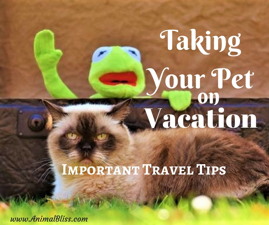 Taking Your Pet on Vacation - Important Travel Tips