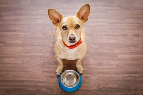 How to Feed a Growing Pup - The Path to Vitality