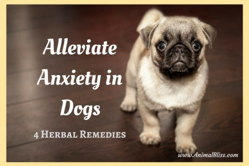 Alleviate Anxiety in Dogs with 4 Herbal Remedies