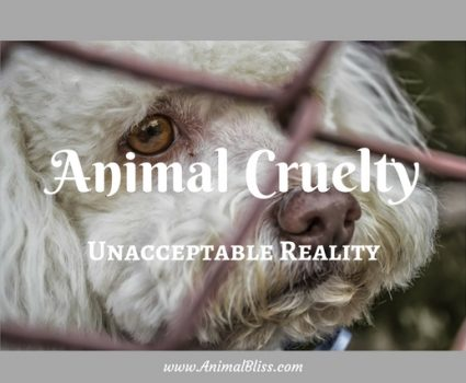 Animal Cruelty: An Unacceptable Reality [Infographic]