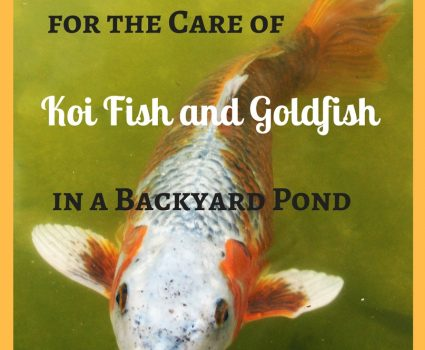 Caring for Koi Fish and Goldfish in a Backyard Pond