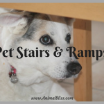 Pet Stairs and Ramps for Injured Pets and Senior Dogs