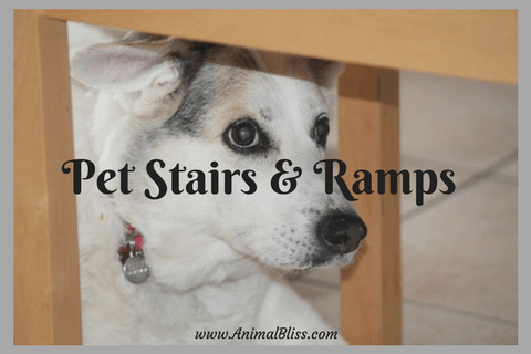 Pet Stairs and Ramps for Senior and Injured Dogs