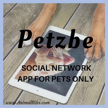 Petzbe App - Social Network for Pets Only, If Pets Could Talk