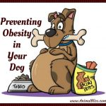 Preventing Obesity in Your Dog