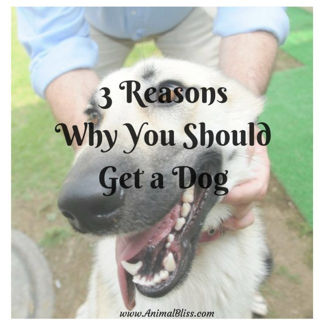 3 Reasons Why You Should Get a Dog