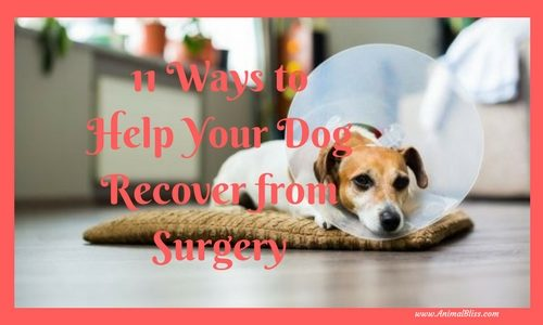 11 Ways to Help Your Dog Recover from Surgery