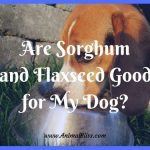 Are Sorghum and Flaxseed Good for My Dog?