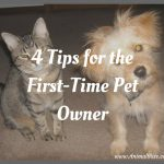 4 Tips for the First-Time Pet Owner