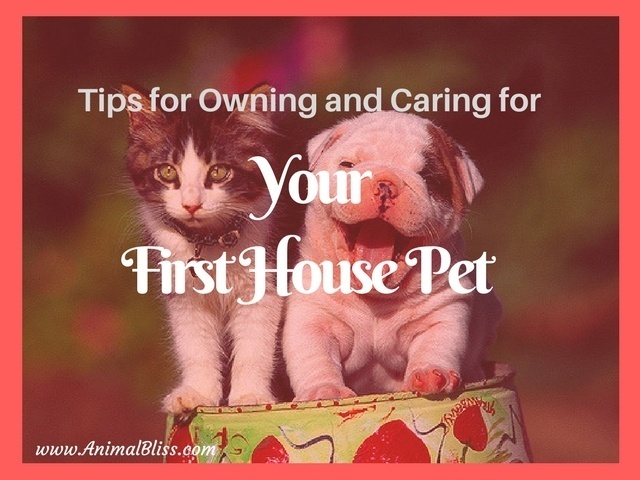 Your First House Pet: Tips for Ownership and Care