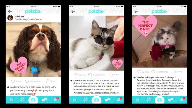 Petzbe App Lend a Paw Challenge