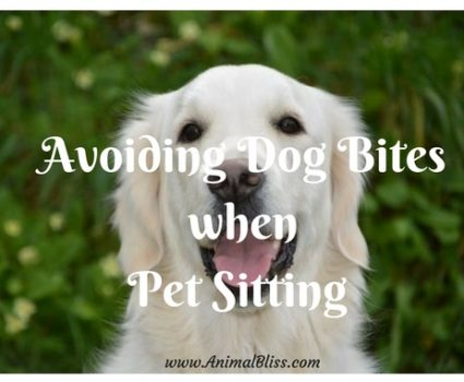 Avoiding Dog Bites when Pet Sitting
