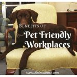 Benefits of Pet Friendly Workplaces are Many
