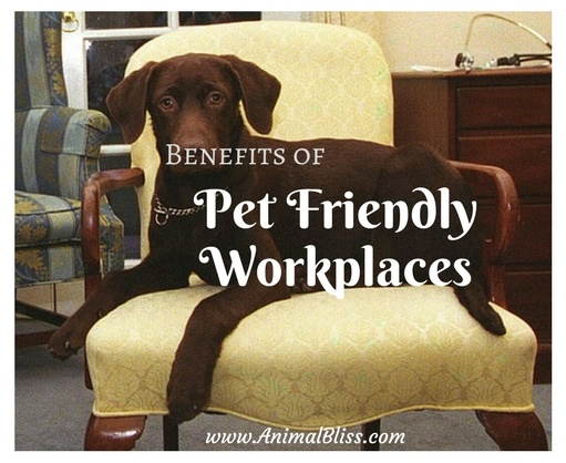 Benefits of Pet Friendly Workplaces - Bringing Your Pet to Work