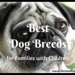 Best Dog Breeds for Families with Children